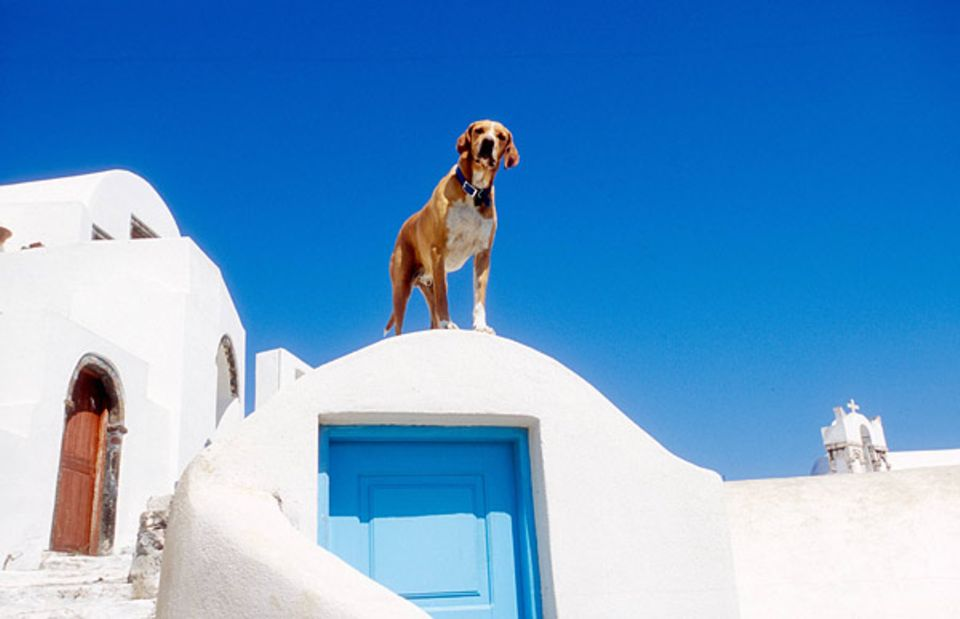 """Auch in Südeuropa kümmern sich viele Menschen gut um ihre Hunde. So wie bei diesem vierbeinigen """"Griechen"""", der von seinem Aussichtspunkt neugierig die Umgebung beobachtet"""