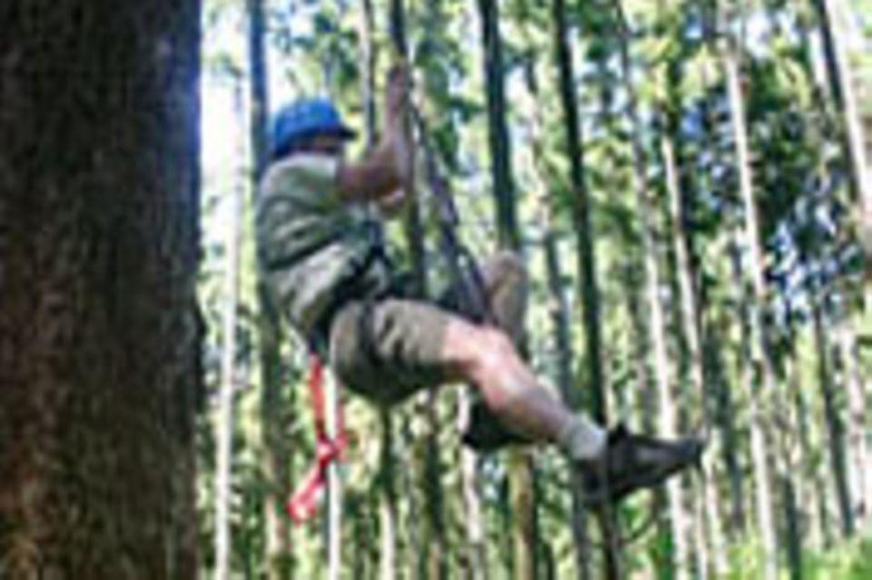 Treeclimbing - die Welt von oben