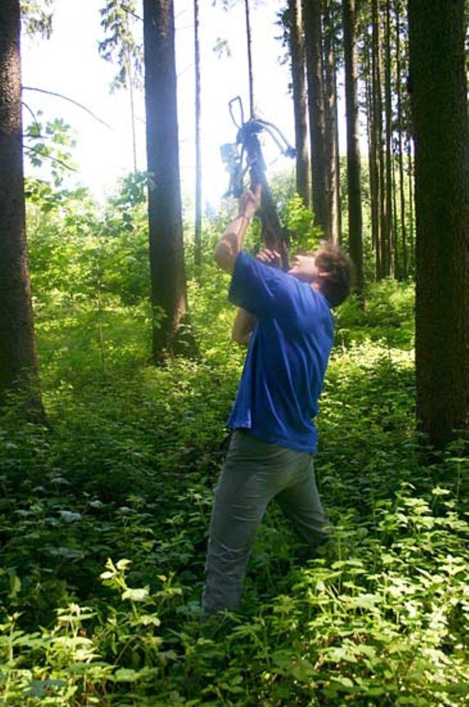 Mit einer Armbrust schießen die Treeclimber einen Faden in die Baumkrone. Daran ziehen sie das Sicherungsseil nach oben