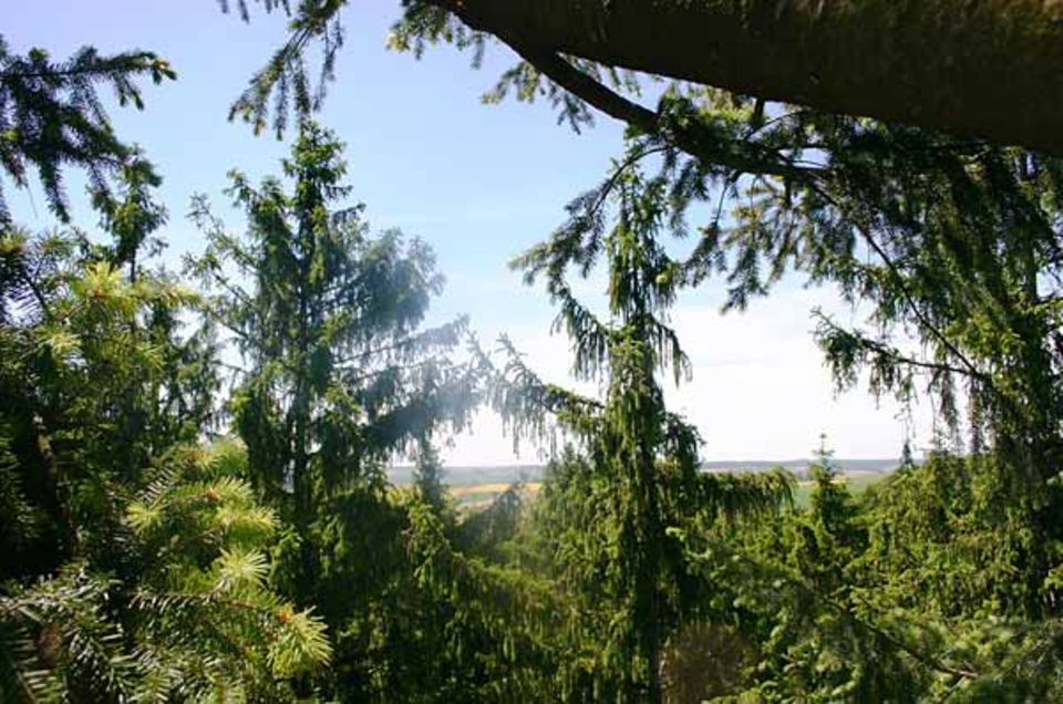 Dieser Ausblick aus dem Wipfel der Douglasie entschädigt jeden Treeclimber für all die Anstrengung