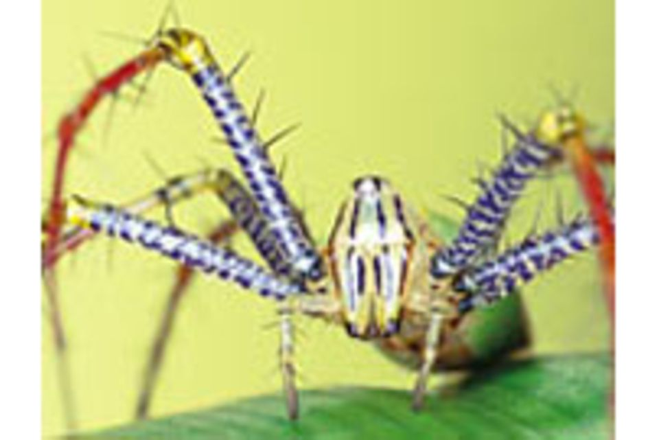 Spinnen: Feinsinnige Räuber
