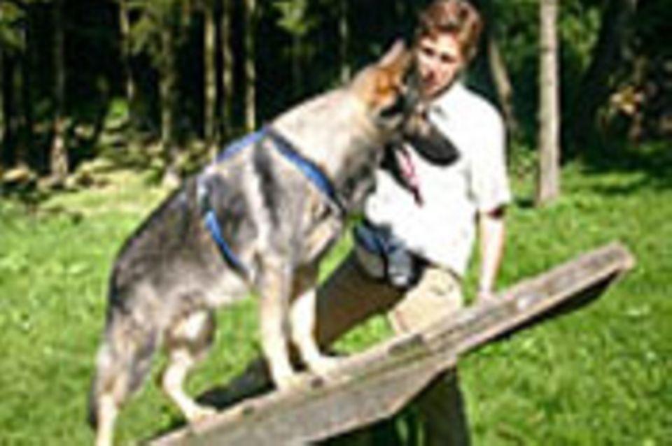 Beruf: Hundetrainer