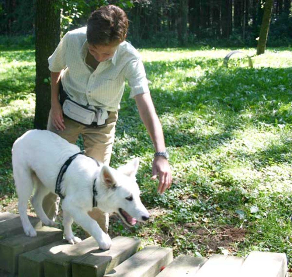 Beruf: Die Hunde müssen Ulrikes Anweisungen ganz genau befolgen