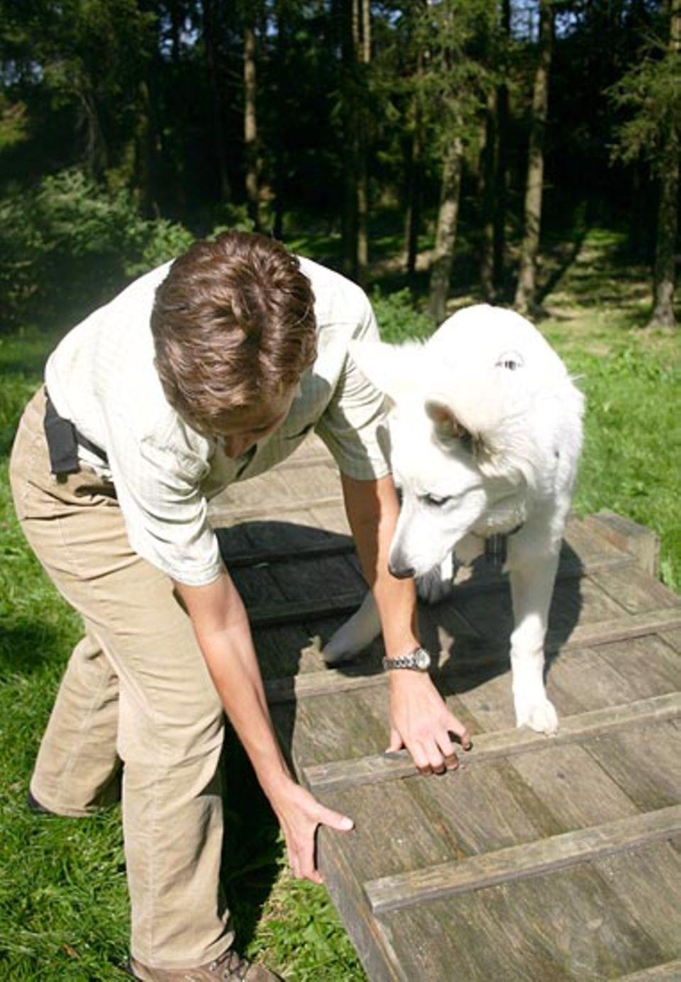 Beruf: Spielerisch geht Ulrike mit den Hunden um