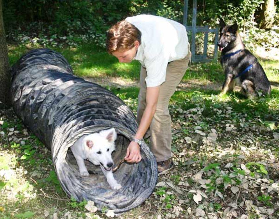 Beruf: Ein Hundetrainer darf nie die Angst vor den Vierbeinern verlieren