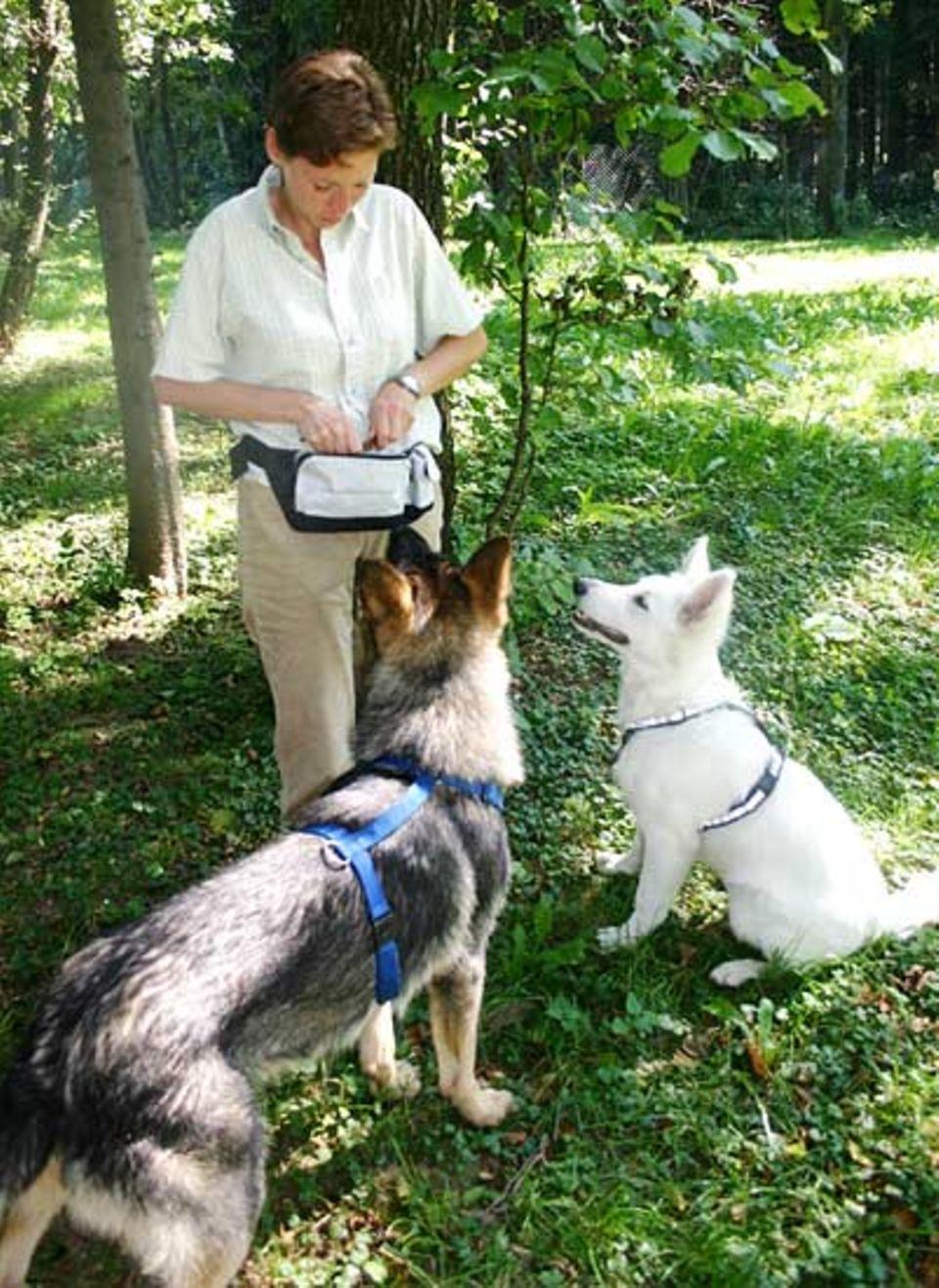 Beruf: Am Ende des Trainings haben sich die Hunde natürlich auch eine Belohnung verdient
