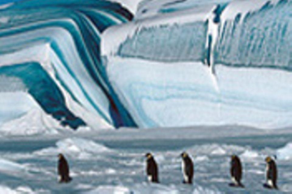 Kinotipp: Die Reise der Pinguine