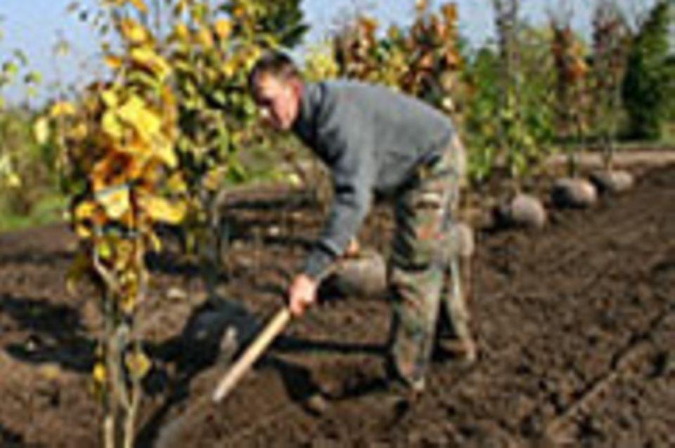 Beruf: Gärtner