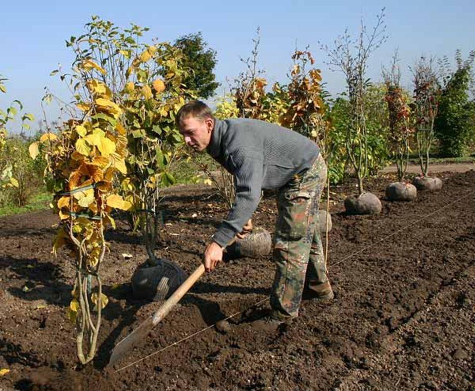 """Beruf: """"Eigentlich war mir immer klar, dass Gärtner das Richtige ist"""""""