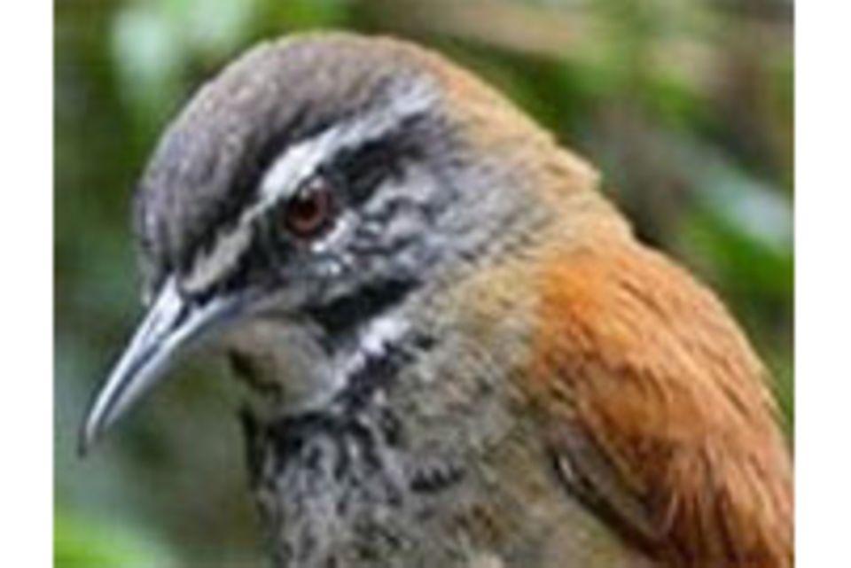 Musik: Die Sinfonie der Vögel