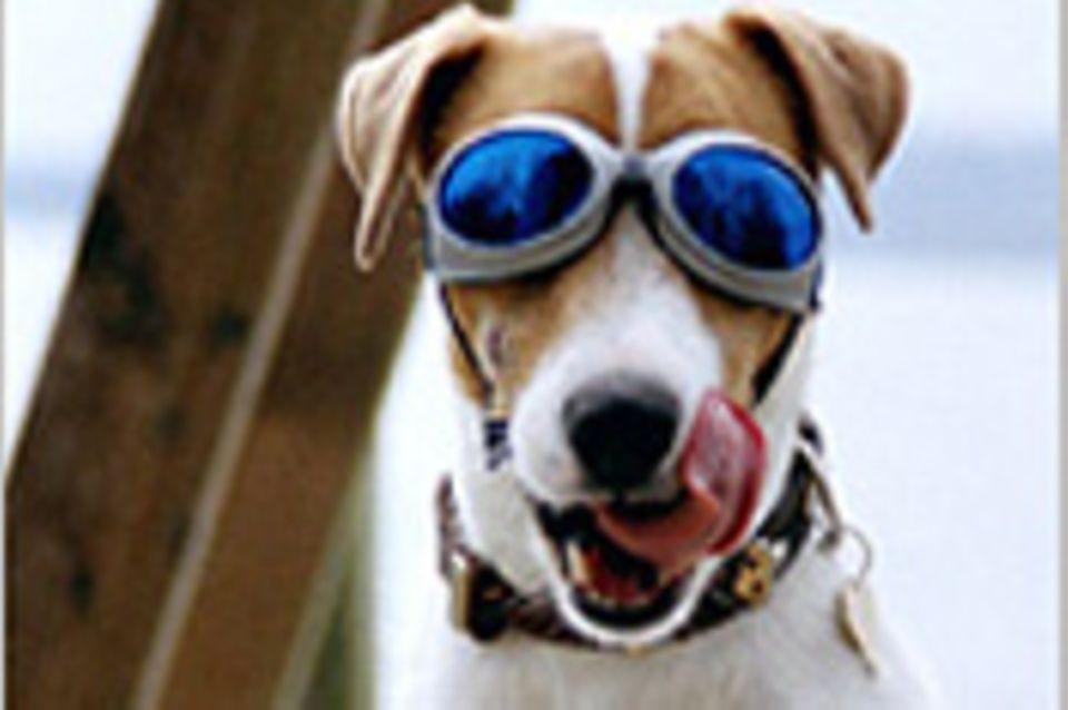 Ganz schön cool: Hunde mit Brillen