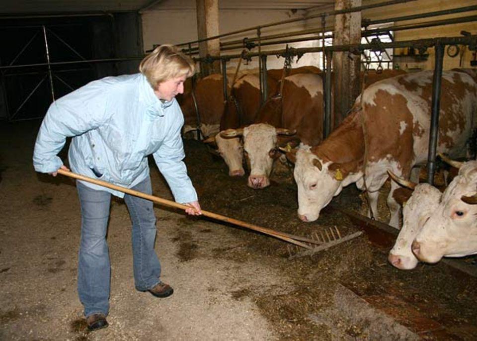 Beruf: Birgit Obermayr kümmert sich liebevoll um die Kühe auf ihrem Hof ...