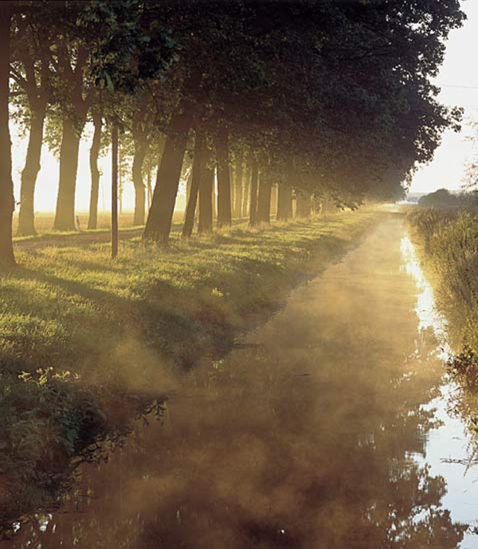 Alleebäüume an kaum befahrenen Straßen, Nebel steigt von den Gräben auf - das Oderbruch ist eine Landschaft voller Melancholie