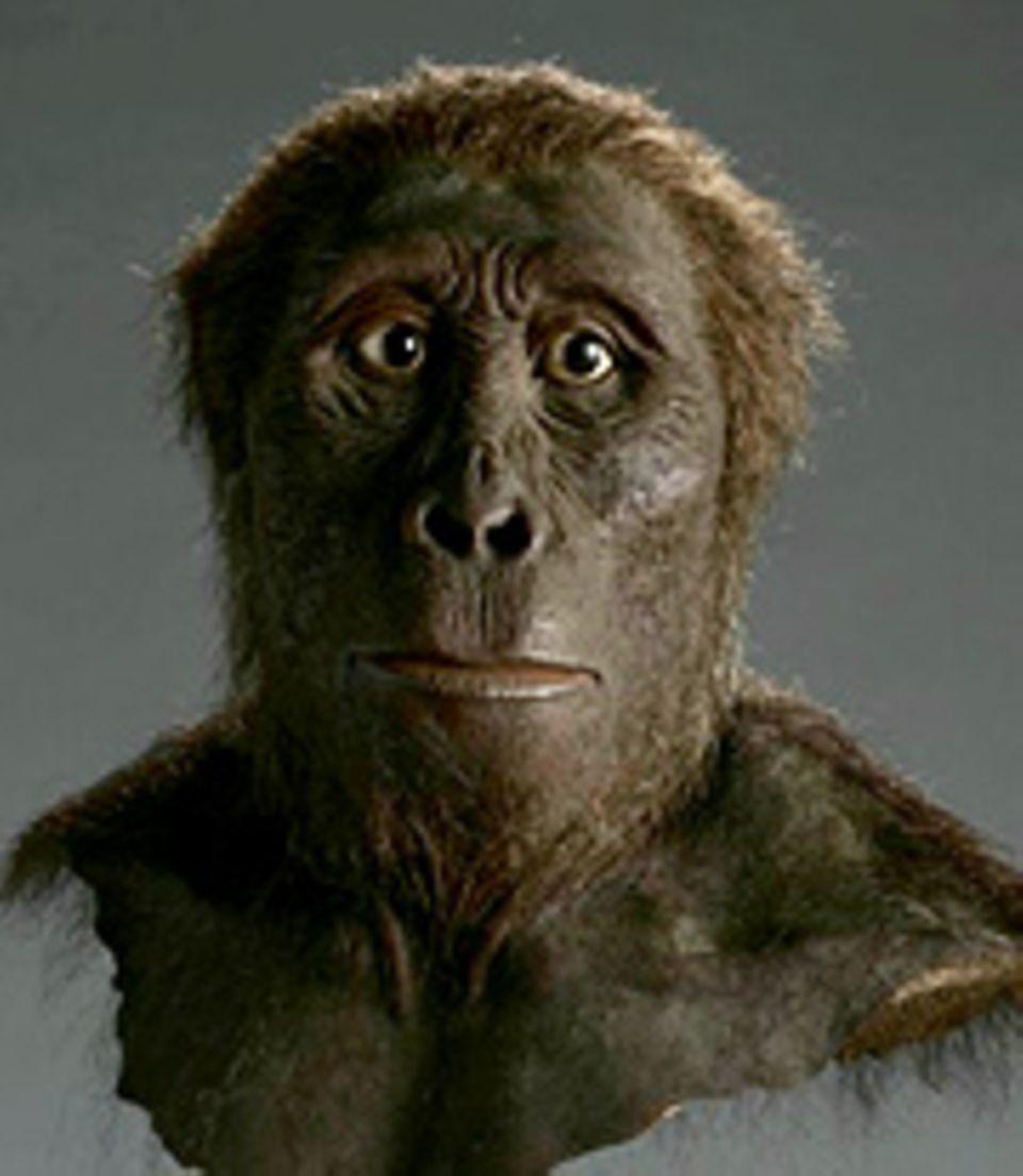 Geschichte: Der Australopithecus afarensis lebte vor etwa 3,9 bis 3 Millionen Jahren in Ostafrika