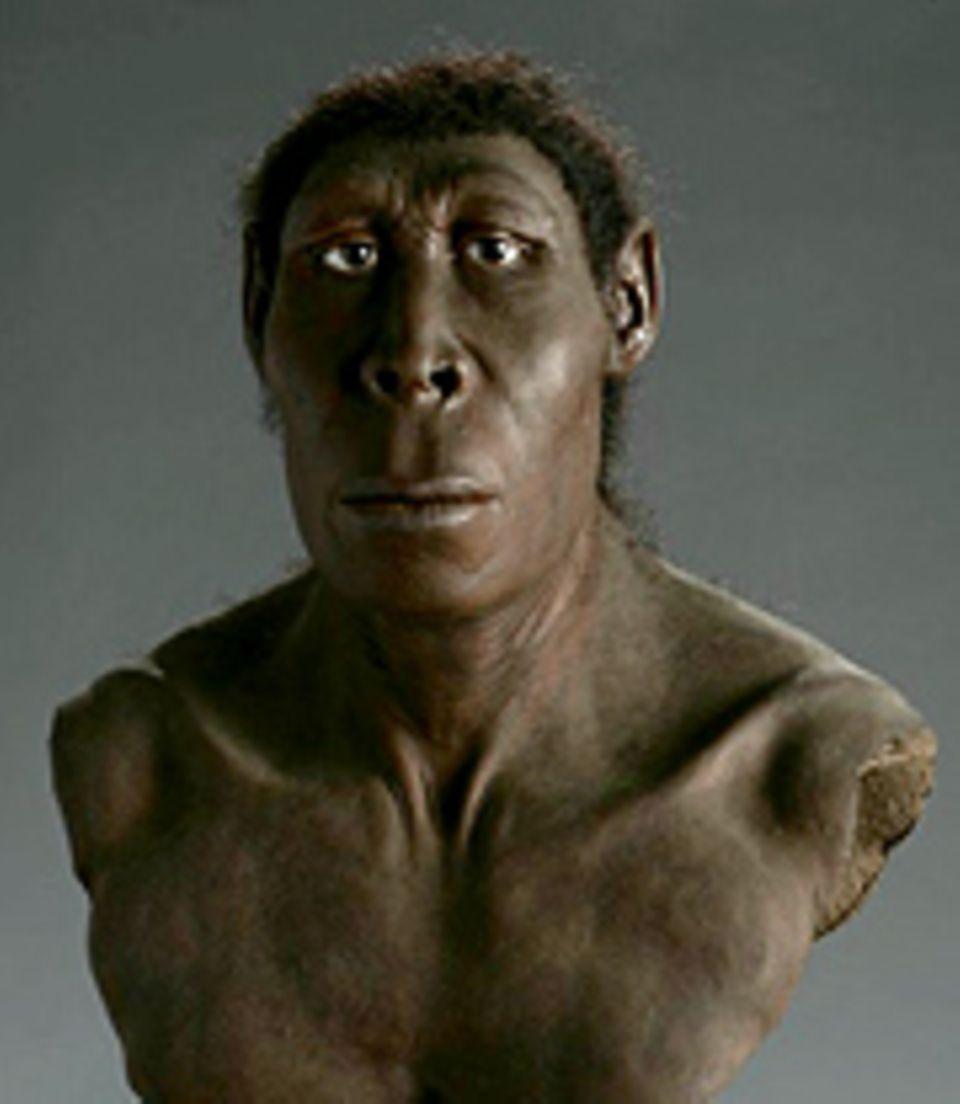 Geschichte: Der Homo erectus lebte vor 1,8 Millionen bis 40 000 Jahren in Afrika und Asien
