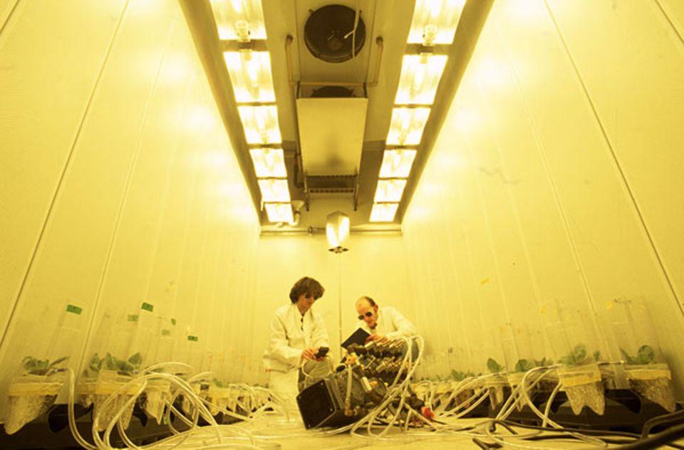 Biologen saugen im Max-Planck-Institut für chemische Ökologie in Jena die Ausdünstungen von Tabakpflanzen zur Analyse ab. Bei Raupenbefall scheiden die Pflanzen ein Gift aus, das die Schädlinge abschreckt