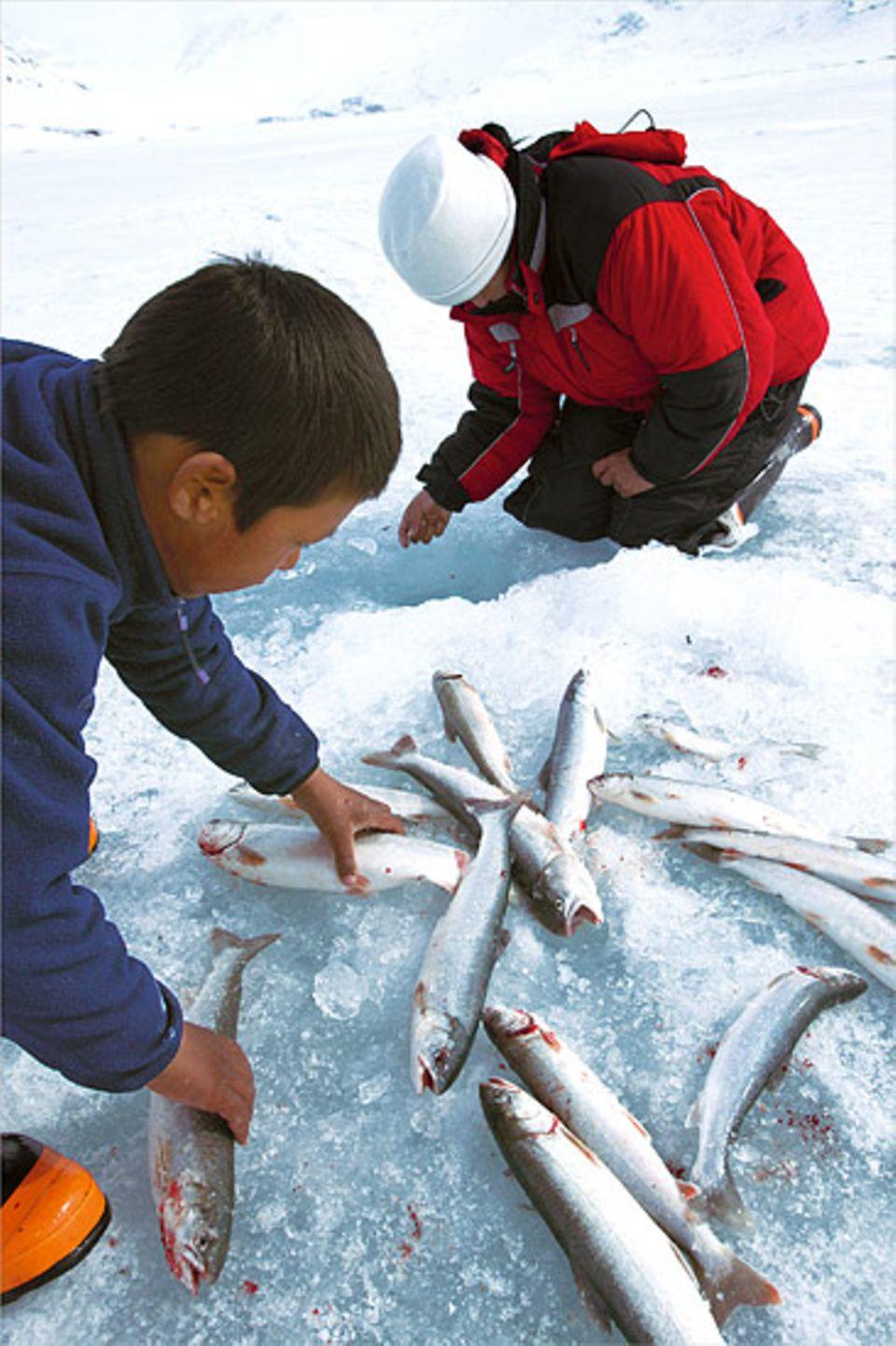 Doch bevor sie den Köder, ein Stück Seehundspeck, auswerfen konnte, musste sie erst ein Loch in das 1,20 Meter dicke Eis schlagen