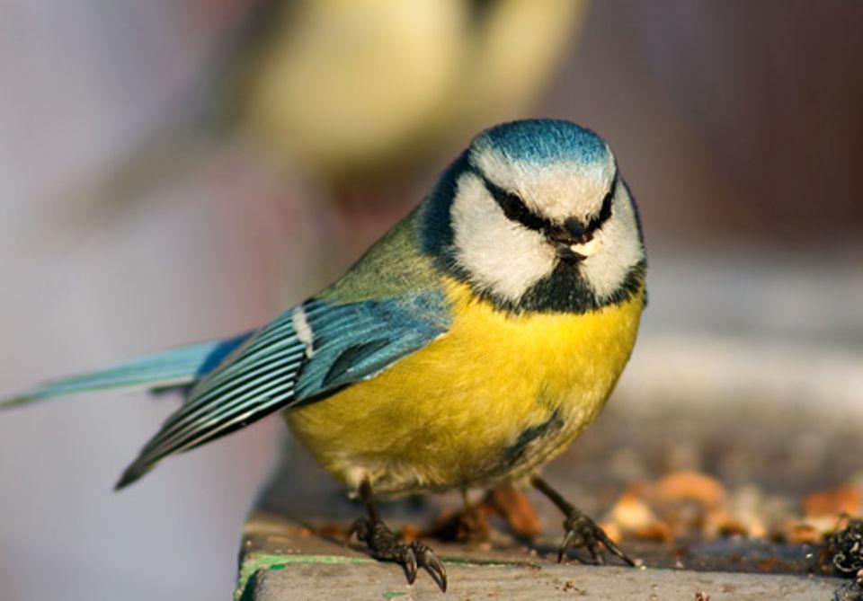 Redwendung: Einen Vogel haben