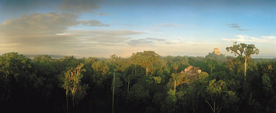 Tikal, eine der untergegangenen Maya-Städte im Dschungel