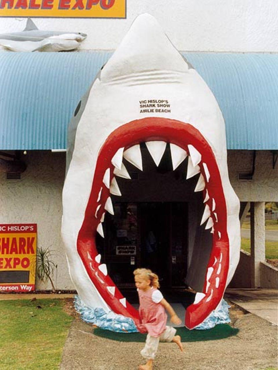 Auf einen Hai trifft Lynn lediglich in der Shark Show von Airlie Beach. Und der hat zwar Zähne, aber beißen kann er nicht