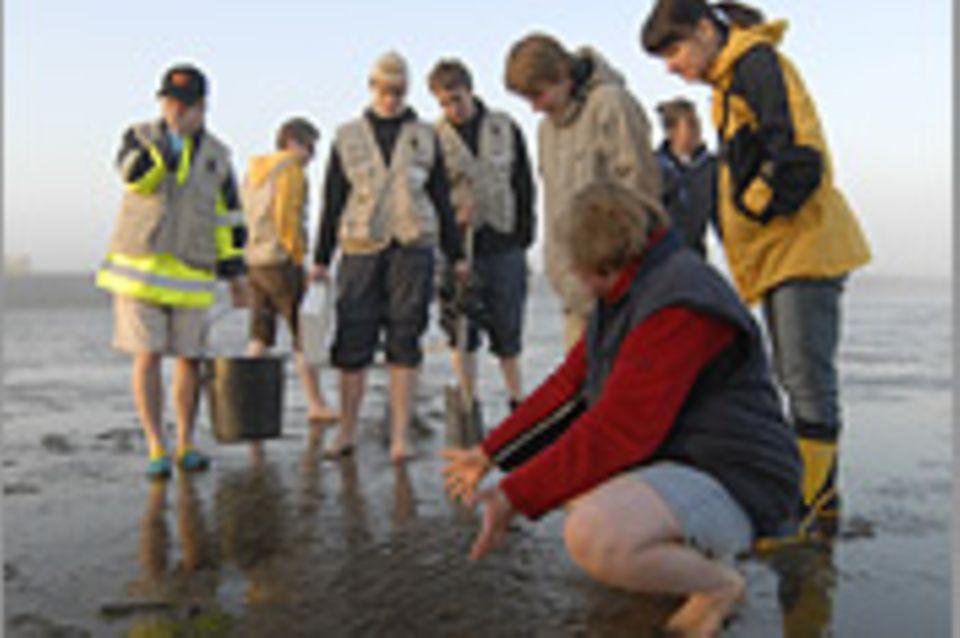 8. GEO-Tag der Artenvielfalt an der Nordsee