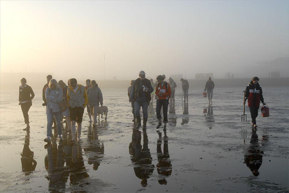 Die Frühaufsteher haben sich zur Wattkartierung im Nationalpark Dorum-Neufeld getroffen