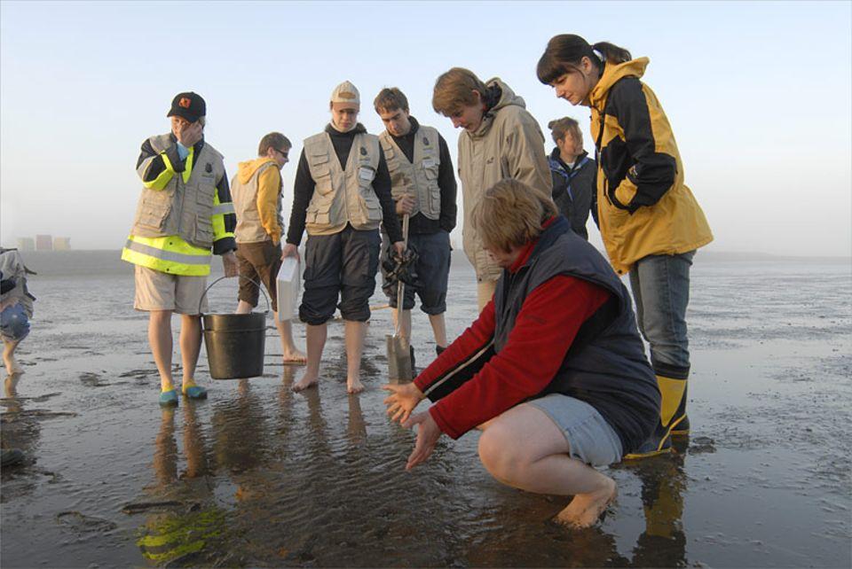 Waltraut Menger (vorn), Leiterin des Nationalpark-Hauses Dorum-Neufeld, mit Teilnehmern des 8. GEO-Tages der Artenvielfalt auf dem Watt