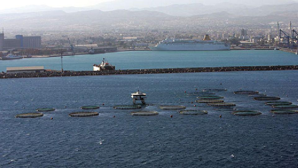 """Vor der Küste Zyperns dokumentierte Greenpeace auf der """"SOS Weltmeer""""-Tour eine Thunfischfarm"""