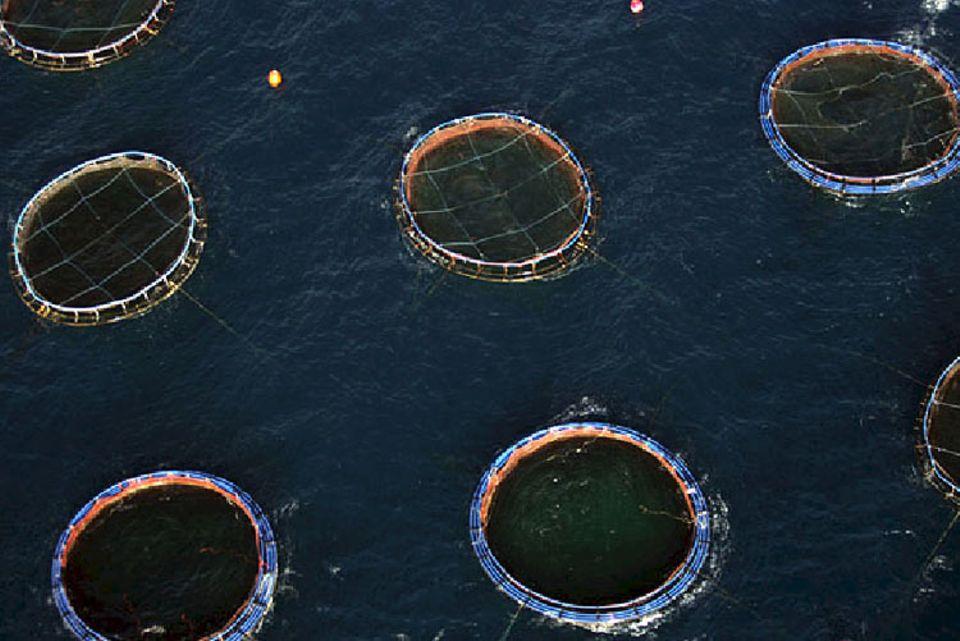 Riesige Mastkäfige einer zypriotischen Thunfisch-Farm