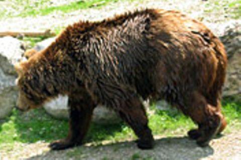 Epilog auf einen Bären
