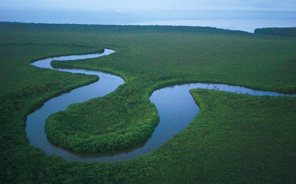 Eine Schlaufe des Sibun River, südlich von Belize City. Hier, in der Nähe der Mündung, sind die Ufer dicht von Mangroven bestanden