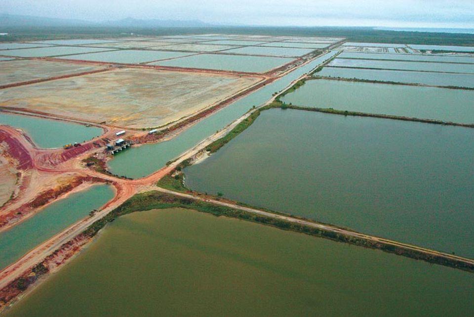 Eine Shrimp-Farm nördlich von Monkey River. Über den Kanal wird Meerwasser in das Areal geführt und in die Becken gepumpt. Gebracuhtes, mit Pestiziden und Antibiotika durchsetztes Wasser wird ungeklärt ins Meer zurückgeleitet
