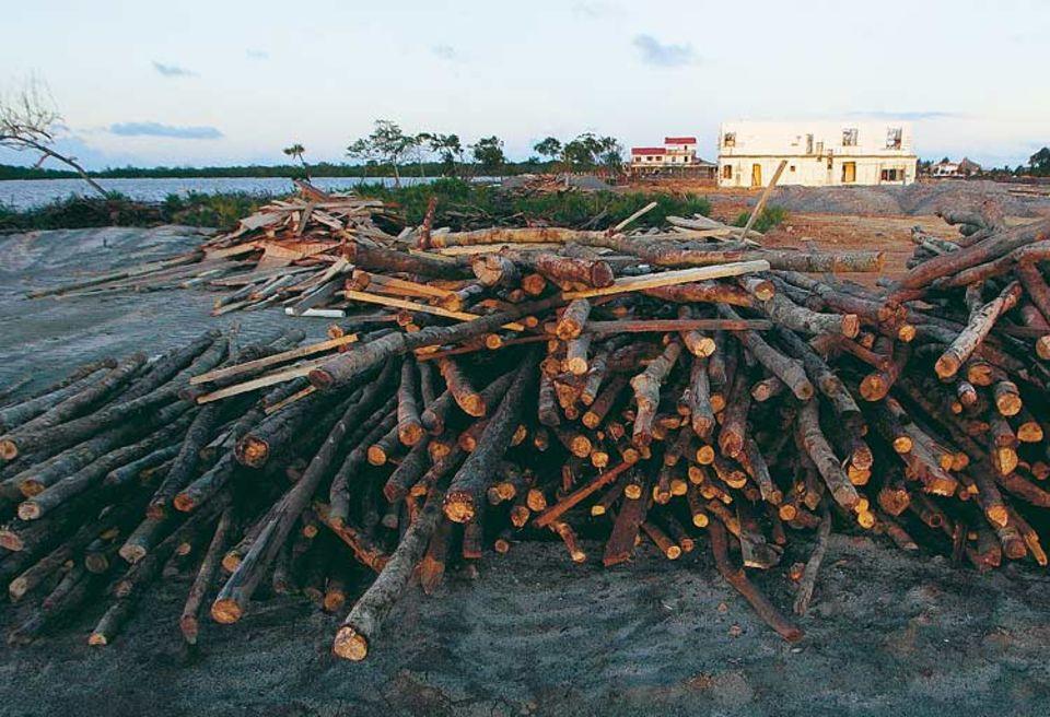 Kahlschlag: Gestern noch ein Mangrovenwald. Heute Bauplatz für 145 Ferienvillen