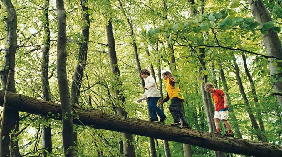 Höhenangst? Keine Spur! Auf einem umgefallenen Baumstamm im Wald macht das Kraxeln viel mehr Spaß als in der Turnhalle