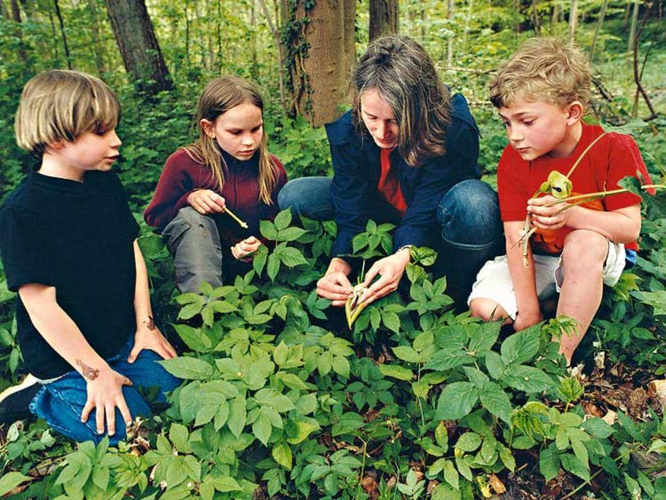 Biologin Sonja Fuhrmann erklärt Jonas, Nikolina und Tim den Aronstab. Die listige Pflanze lockt Insekten an und sperrt sie zum Bestäuben für eine Nacht in ihrer Blüte ein