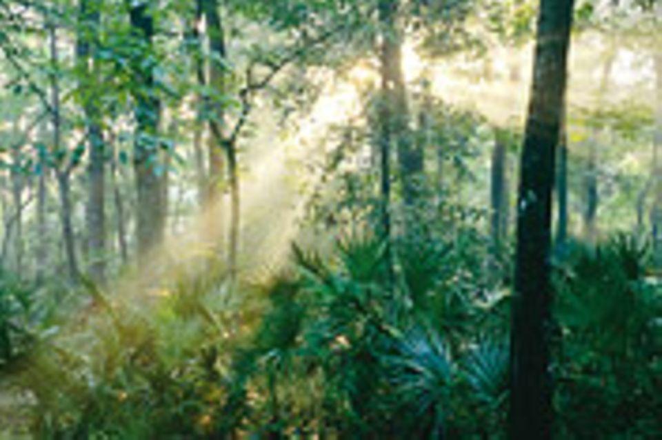 Florida: Wanderer zwischen den Welten