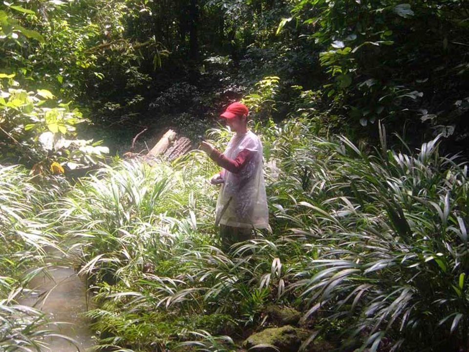 Kartierungsarbeiten im Regenwald