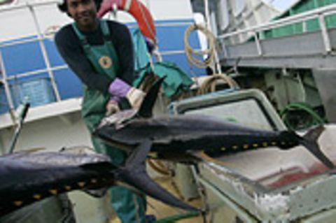Pazifik: Fischbestände vor dem Aus