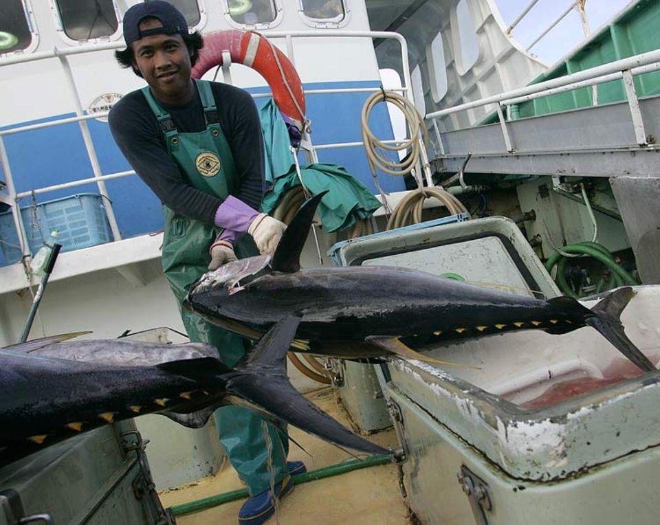 """Geschätzte und gefährdete Beute: ein Großaugen-Tunfisch an Bord des japanischen Fischereibootes """"Keisei Maru No.53"""""""