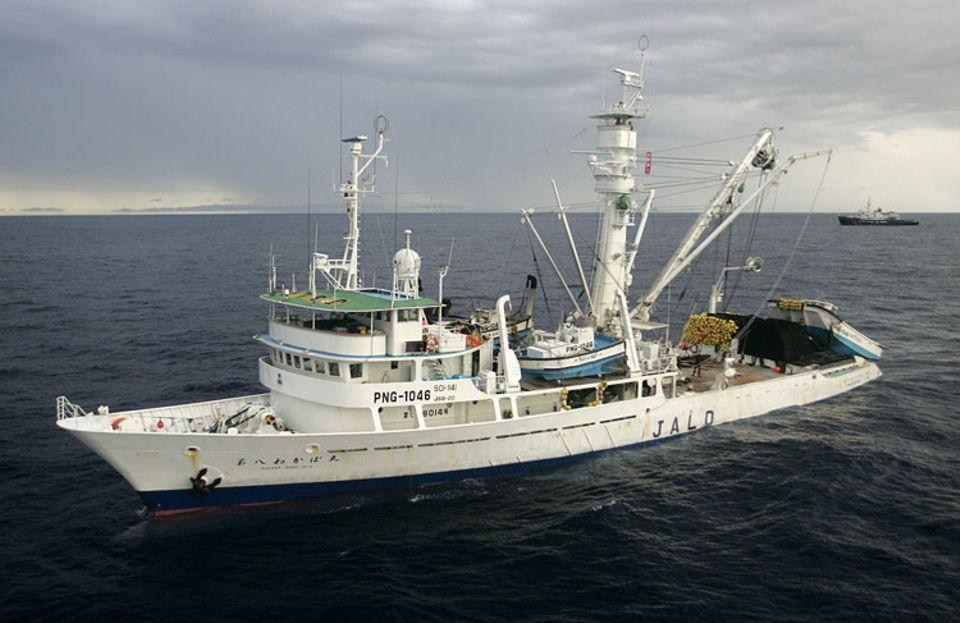 Besonders effizient: Ringwadennetz-Fischerei (hier ein japanisches Schiff)