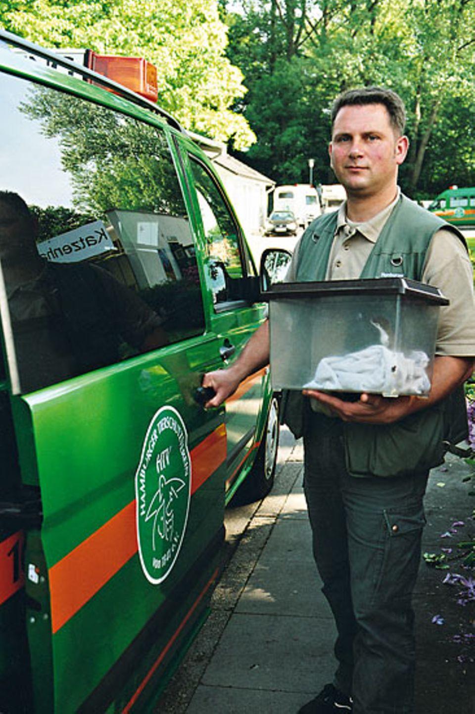Wenn irgendwo in Hamburg Tiere in Not sind, rückt Heiko Nauschütz mit seinem grünen Transporter aus: Diesmal hat er ein Mauswiesel mitgebracht
