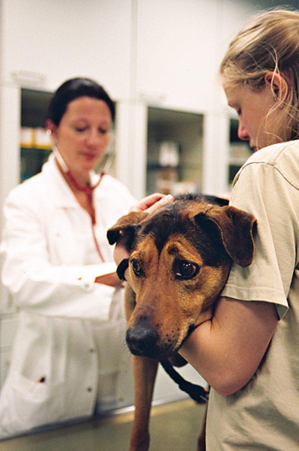 Alle Neuankömmlinge müssen die Untersuchung bei Tierärztin Urte Hitzer über sich ergehen lassen