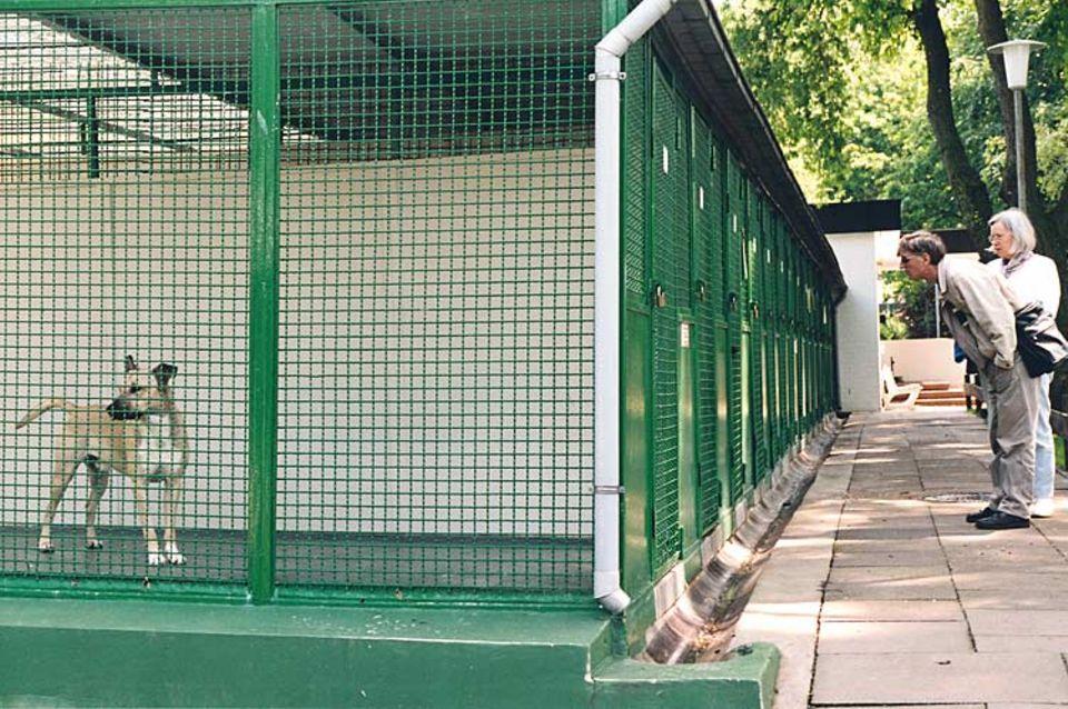 Manchmal wird es in den Käfigen des Hamburger Tierheims eng. Trotzdem geben die Pfleger die Hunde erst dann her, wenn sie sich überzeugt haben, dass sich die neuen Besitzer gut um die Tiere kümmern