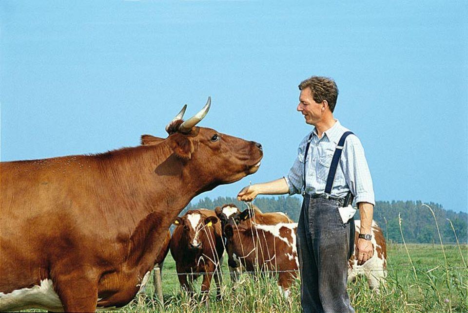 Bauer Timmermann kümmert sich um seine Tiere. Hanne ist die Leitkuh der Herde