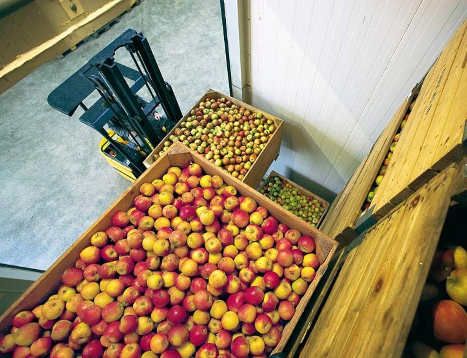 Einige Äpfel wird Alexander Maxim sofort verkaufen, die meisten lagert er in riesigen Kühlräumen ein. In einem einzigen wäre Platz für seine gesamte Ernte: rund 300 Tonnen Äpfel