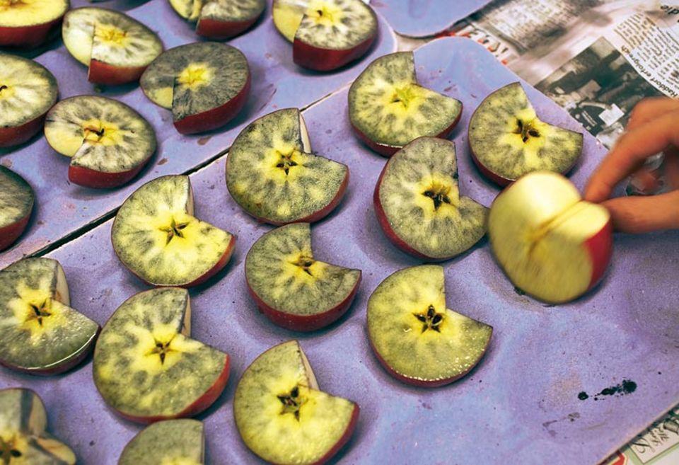 On die Jonagold-Äpfel schon reif sind? Um das herauszufinden, machen Wissenschaftler einen chemischen Test. Sie tauchen Apfelstücke in eine Jod-Lösung: Je stärker die Früchte sich färben, desto unreifer sind sie noch