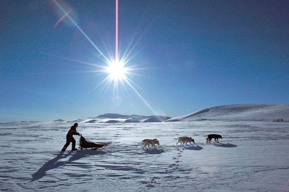 Ein Team auf großer Fahrt: Mit Vorfreude lassen sich die Hunde an den Schlitten spannen