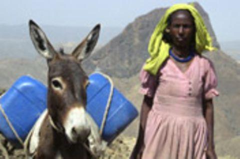 Eritrea – Ein Esel für die Zukunft