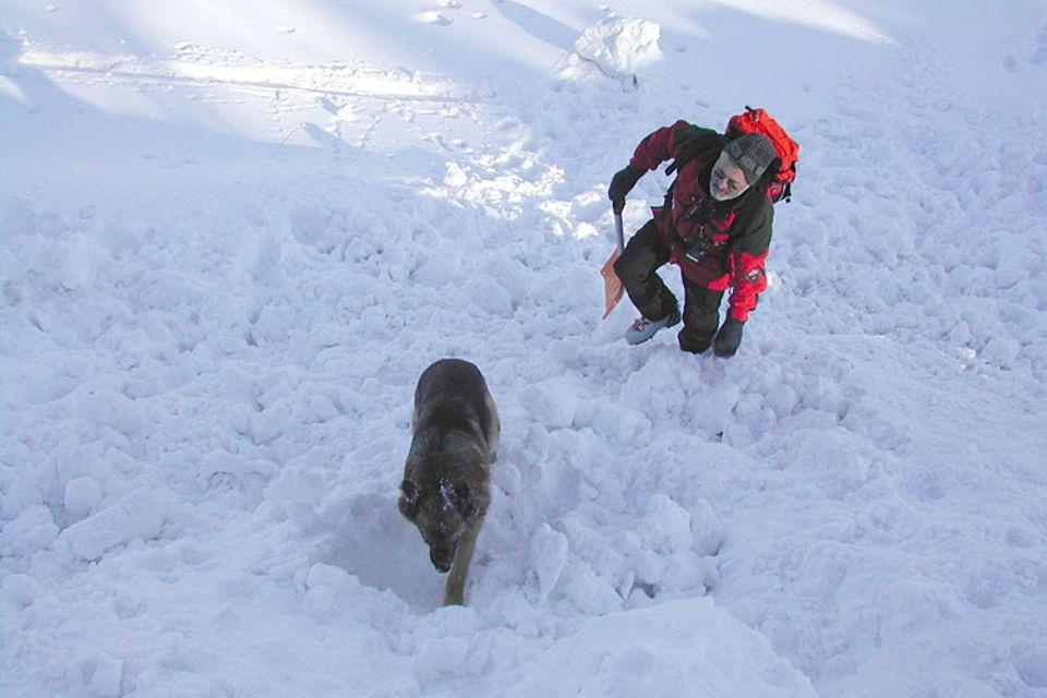 Tiere: Welpe im Rettungshund-Training