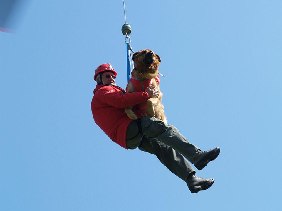 Lawinenhunde: Im Gurt unterm Hubschrauber: Vor dem Fliegen hat Amor keine Angst